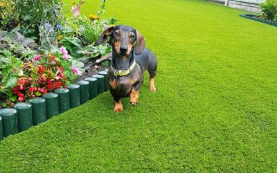 Enjoy a Mud Free Winter with Pet Friendly Artificial Grass