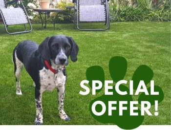 WINTER OFFER for Pet Owners
